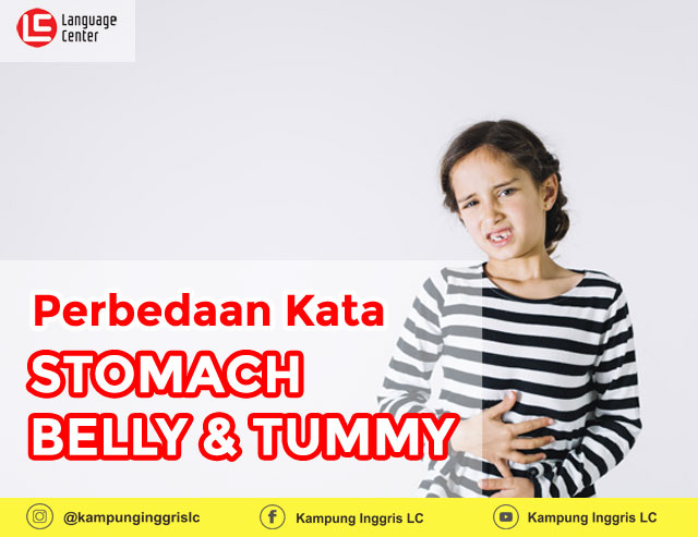perbedaan kata stomach belly dan tummy